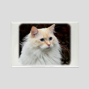 Ragdoll Cat 9W082D-020 Rectangle Magnet