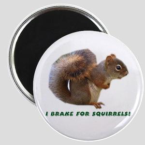 """""""I Brake for Squirrels"""" Magnet"""