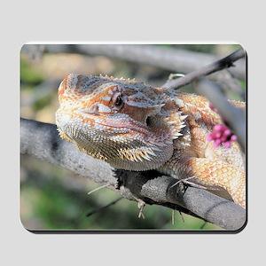 Bearded Dragon 001 Mousepad