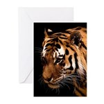 Bengal Tiger Greeting Cards (Pk of 20)