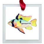 Ram Butterfly Cichlid Square Glass Ornament