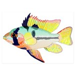 Ram Butterfly Cichlid 5x7 Flat Cards (Set of 10)