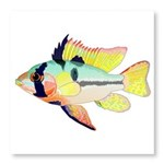 Ram Butterfly Cichlid Photo Wall Tile