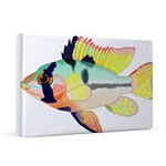Ram Butterfly Cichlid 20x30 Canvas Print