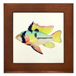 Ram Butterfly Cichlid Framed Tile