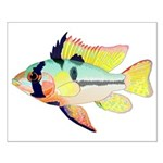 Ram Butterfly Cichlid Posters