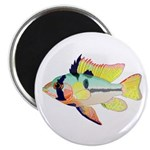 Ram Butterfly Cichlid Magnets