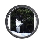 Whiskers in the sun Wall Clock