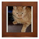 Oliver stalking Framed Tile