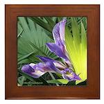 Wild Birdlike Iris - Framed Tile