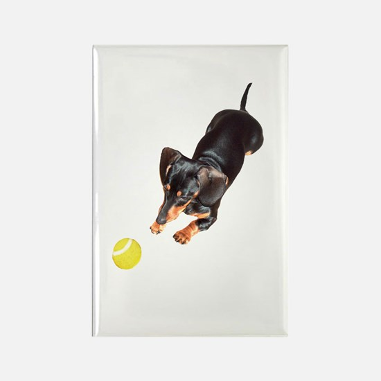 'Lily Plays Dachshund Dog' Rectangle Magnet