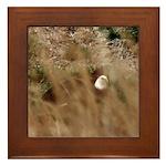 Eagle in Sagebrush Framed Tile