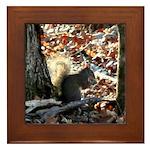 Gray Squirrel Framed Tile
