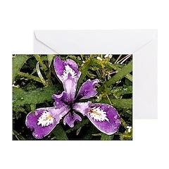 Pacific Coast Iris Greeting Cards (Pk of 10)
