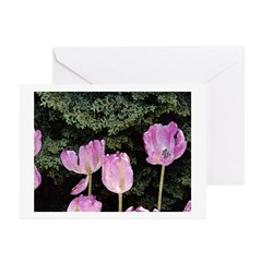 May Tulips Greeting Cards (Pk of 10)
