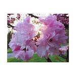 Kwanzan Cherry Blossoms Small Puzzle