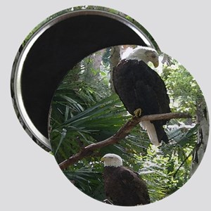 Bald Eagle Magnet