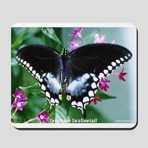 Spicebush Swallowtail Mousepad