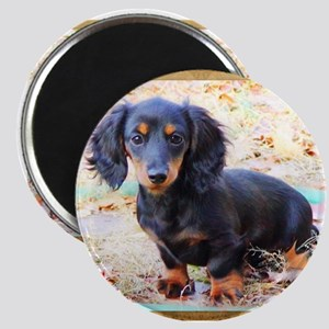 Puppy Love Doxie Magnet