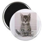 """Cat Coat 2.25"""" Magnet (10 pack)"""