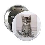 "Cat Coat 2.25"" Button (10 pack)"