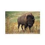 Bison 38.5 x 24.5 Wall Peel