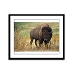 Bison Framed Panel Print