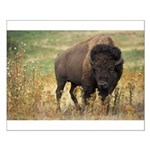 Bison Small Poster