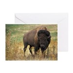 Bison Greeting Cards (Pk of 10)