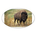 Bison Sticker (Oval)