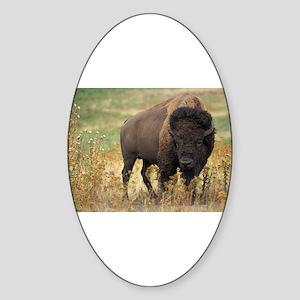 Bison Sticker (Oval)