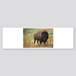 Bison Sticker (Bumper)