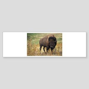 Bison Sticker (Bumper)