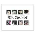 Got catnip Small Poster