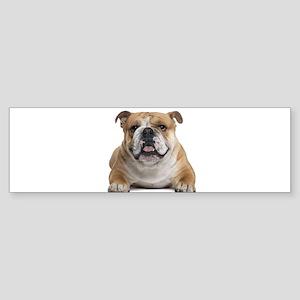 Cute Bulldog Bumper Sticker