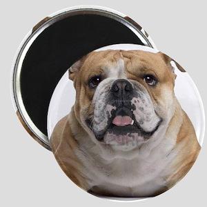 Cute Bulldog Magnets