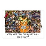 The Birding Cat Postcards (Package of 8)