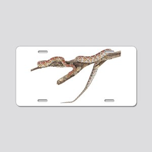 Corn Snake Photo Aluminum License Plate