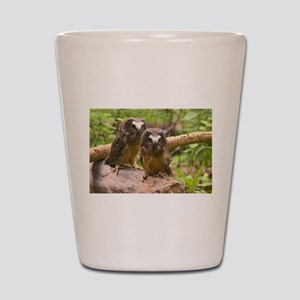 Baby Saw Whet Owls Shot Glass