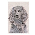 Boykin Spaniel Postcards (Package of 8)
