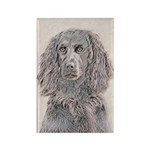 Boykin Spaniel Rectangle Magnet