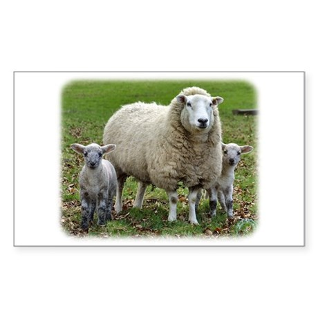 Sheep and Lambs 9R12D-35 Sticker (Rectangle 50 pk)