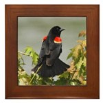 Redwing Perching Framed Tile