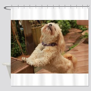 blond lhasa stretching on bench in Shower Curtain