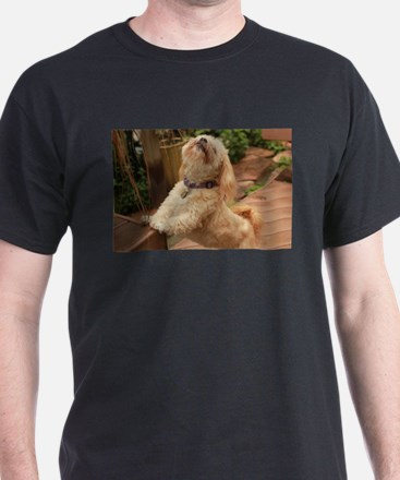 blond lhasa stretching on bench in back ya T-Shirt