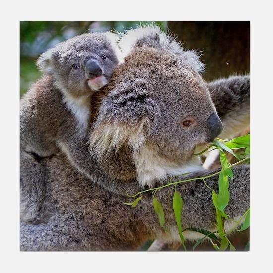 Baby Koala Bear with mom Tile Coaster