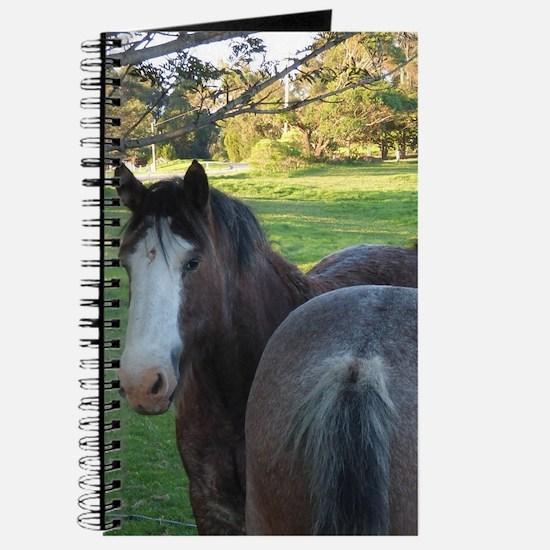Draught Horses Journal