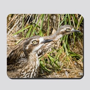 Stone Curlew Mousepad