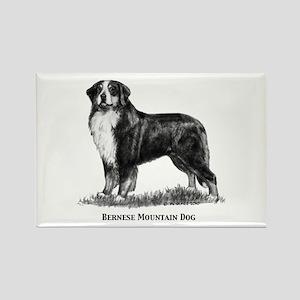 Bernese Mountain Dog Rectangle Magnet