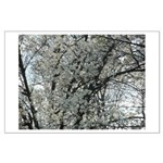 White Blossoms Large Poster